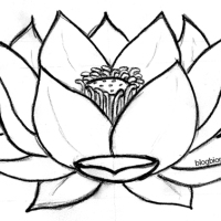 DIY : masque au lotus sacré.
