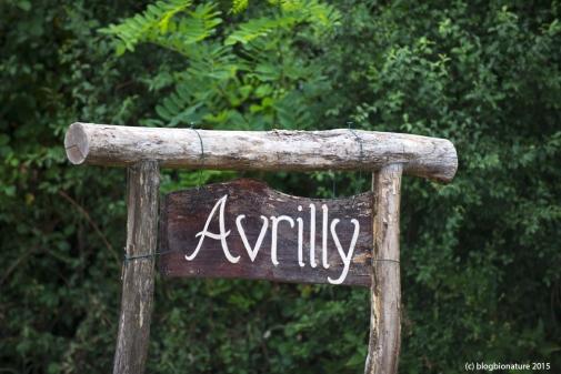 avrilly (1)