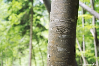 La forêt nous a à l'oeil !